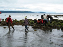 A walk in the intertidal zone.